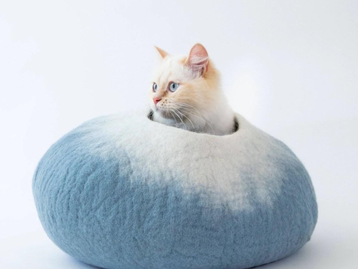 catcavecove featured image