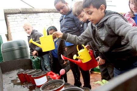 primary school gardening