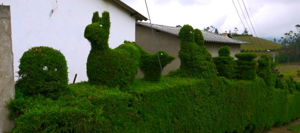 Topiary in Isinliví.