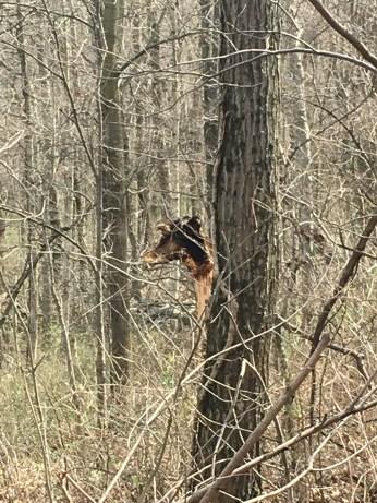 It's a giraffe!