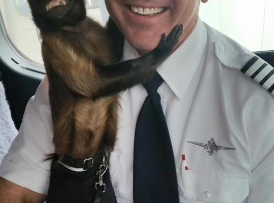 "The Hangover Monkey ""Crystal"" Flies First Class"