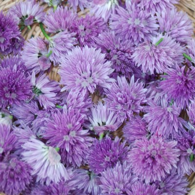 How to Make Chive Blossom Vinegar