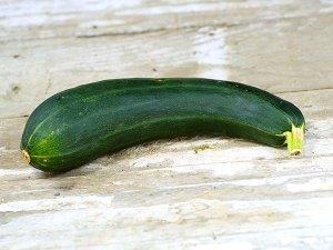 Green Bush Zucchini Heirloom Vegetable Plant | The Coeur d'Alene Coop