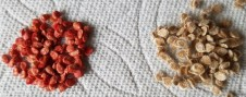 Treated Tomato seeds verus untreated seed | The Coeur d'Alene Coop