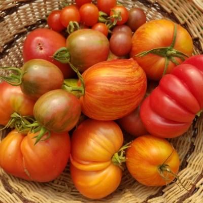 Heirloom Tomatoes | The Coeur d'Alene Coop