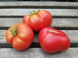 Sasha's Altai Tomato | The Coeur d Alene Coop