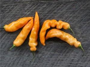 Sugar Rush Peach Hot Pepper | The Coeur d Alene Coop