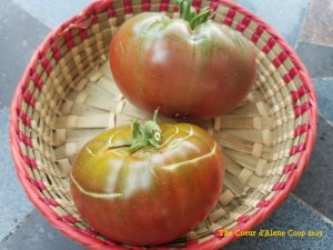 Concentric cracking in tomatoes | The Coeur d Alene Coop
