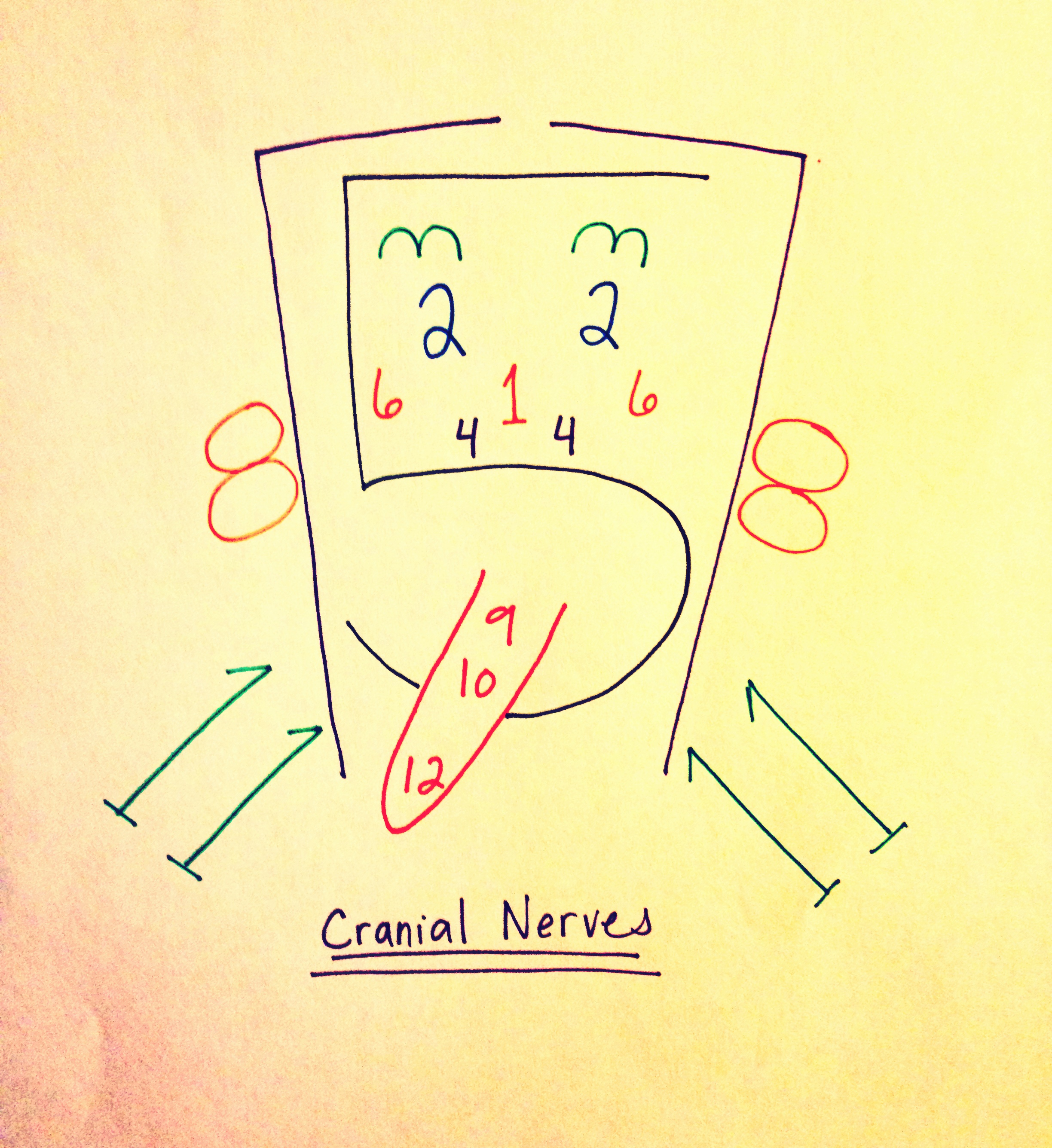 Cranial Nerve Face Diagram Pictures To Pin