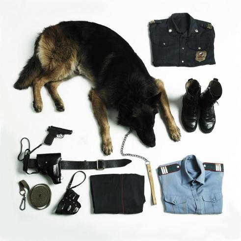 K9 Dog Units - How Are Police Dog Trained? 1