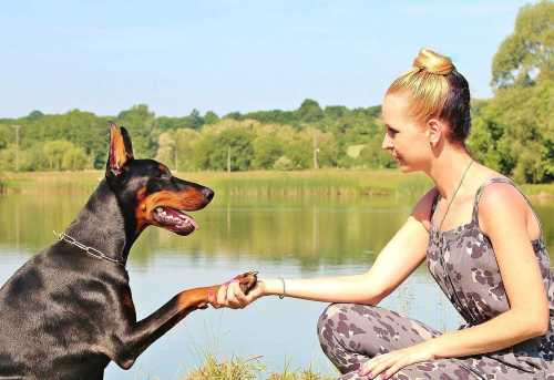 DOG TRAINING COMMUNICATE WITH YOUR DOG
