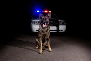 police dog k9 units police car narcotic dog