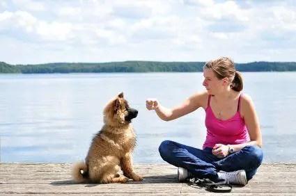 dog best friend training