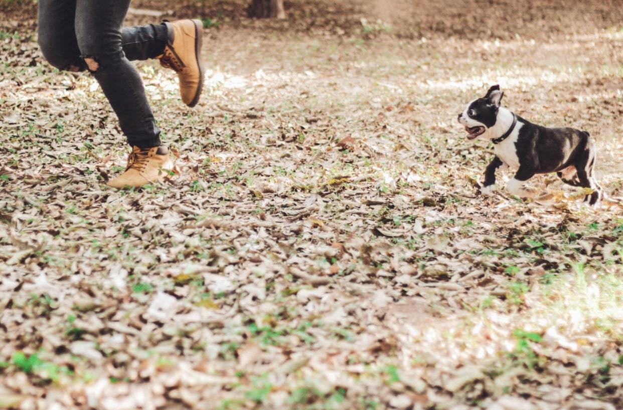 TRAINING A PUPPY TO RUN