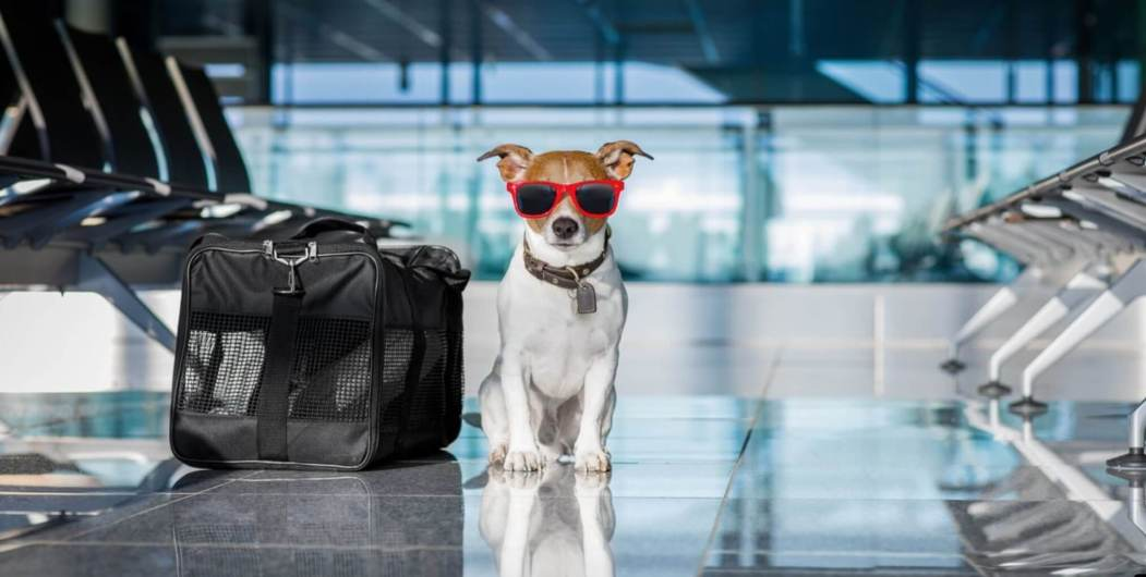 Backpacking and traveling with a dog jack russel