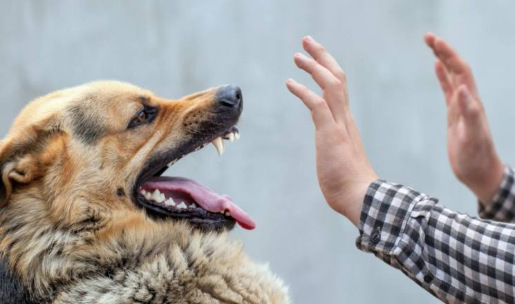 dog aggressive hand socialization with strangers