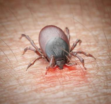 removing ticks, caring tips for your dog