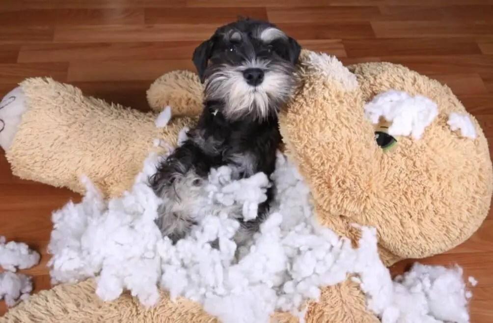 educare un cucciolo che distrugge tutto ansia da separazione