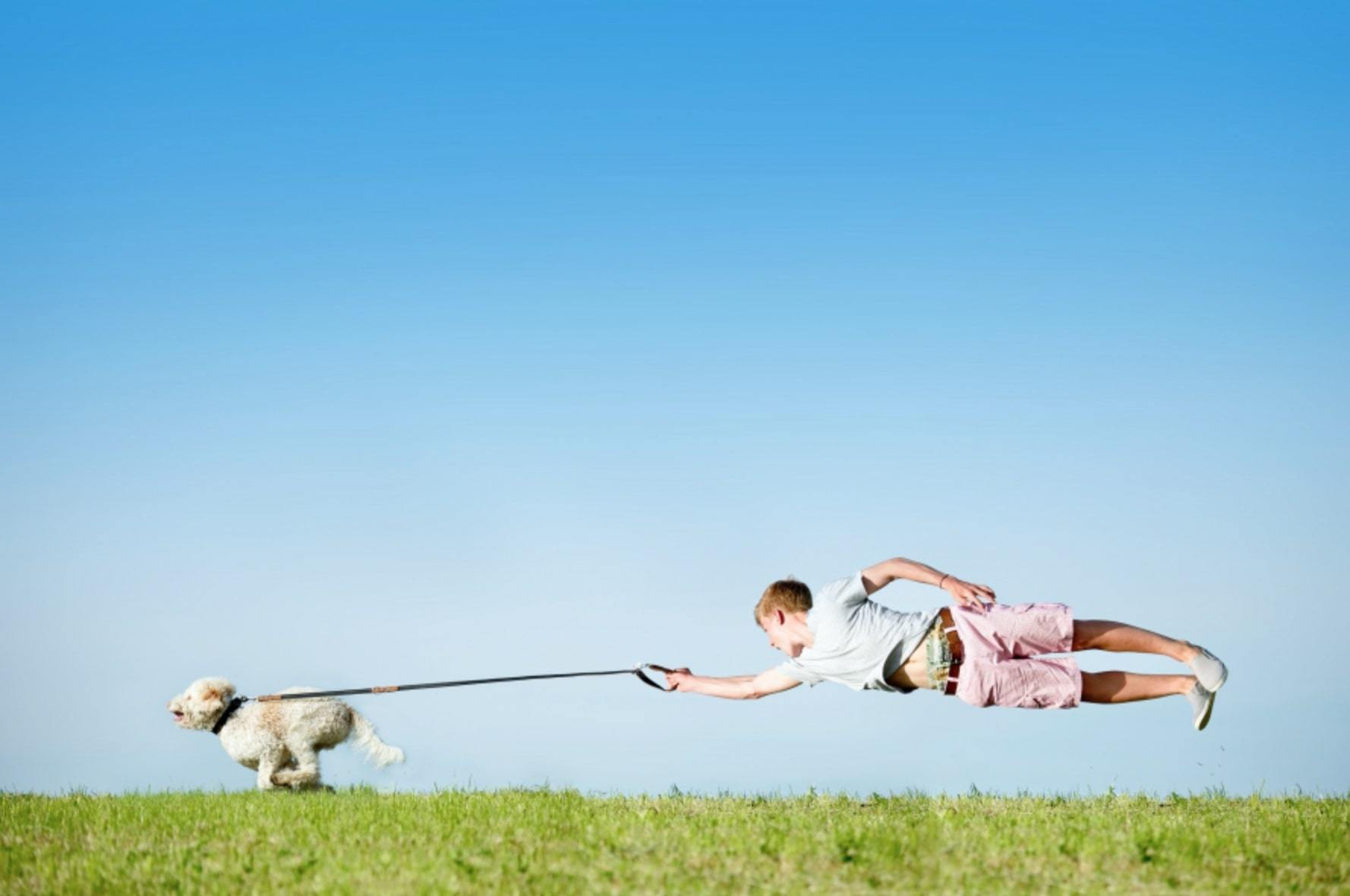 dog pull owner on the leash