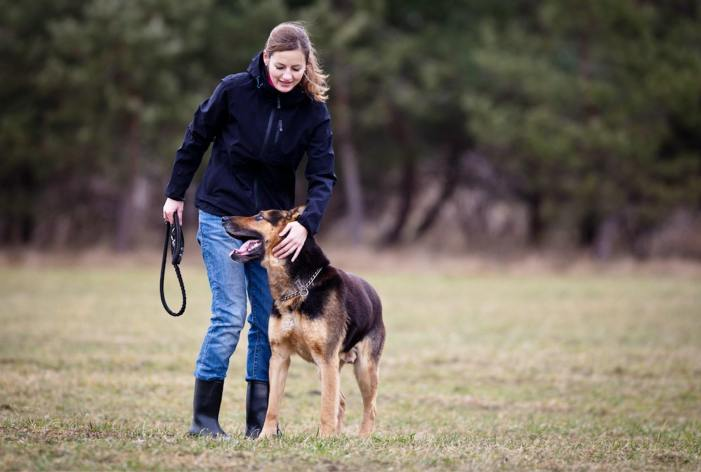 german shepherd and owner obedience training