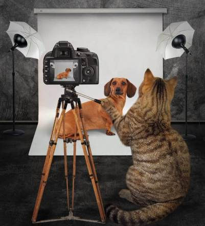 pet photographer bag photo studio photography