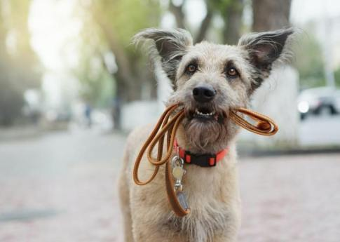 teach your dog to fetch perfectly with the leash