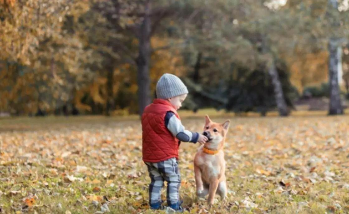 young boy feeding young puppy