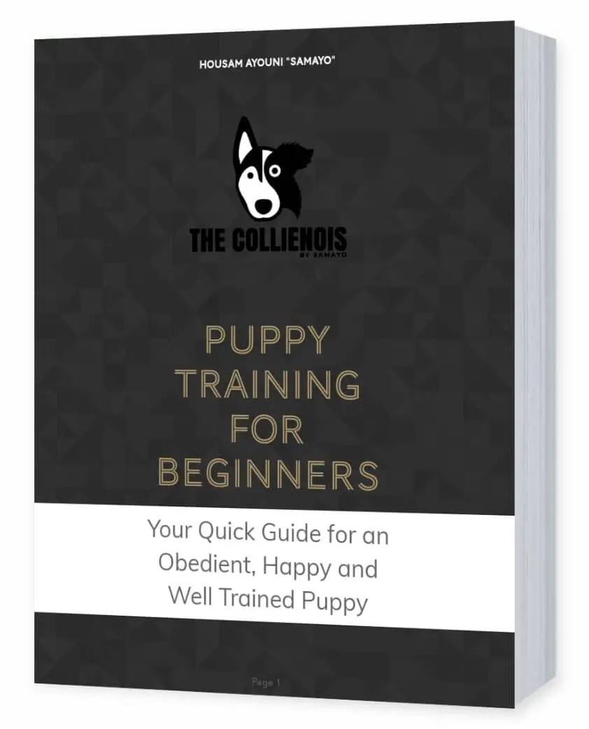 Dog Training Treats GUIDE | + 8 Healthy Dog Treat Recipes 16