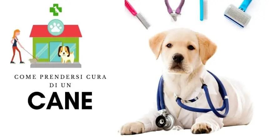 Come Prendersi Cura Di Un Cane? [Manuale Di Istruzioni 2020]