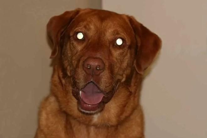 Come vedono i cani i colori e al buio- la vista del cane tapetum lucidum