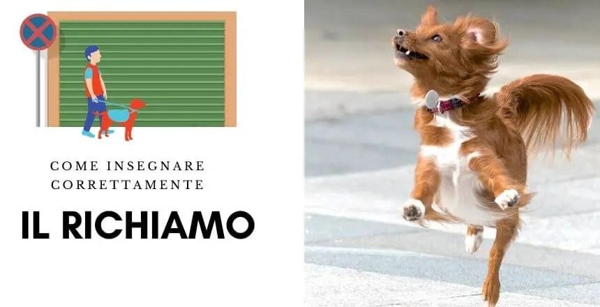 Il richiamo - come insegnare il comando vieni al cane - insegnare al cane a venire
