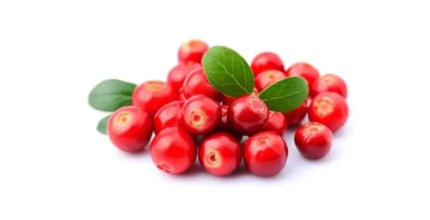 Mirtilli rossi ai cani - frutta ai cani - quale frutta possono mangiare i cani