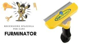 Recensione spazzola furminator per cani 2020