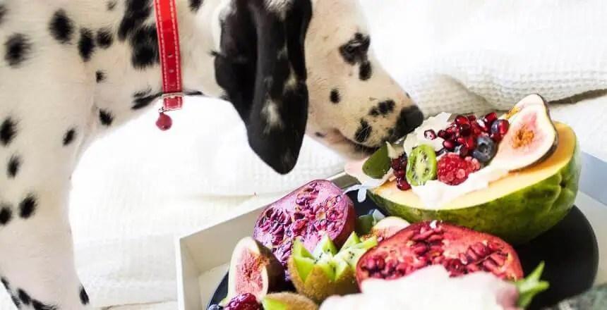 frutta ai cani - quale frutta possono mangiare i cani (2)