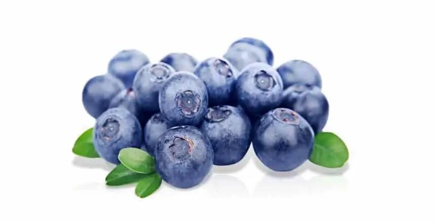 mirtilli ai cani - frutta ai cani - quale frutta possono mangiare i cani (13)