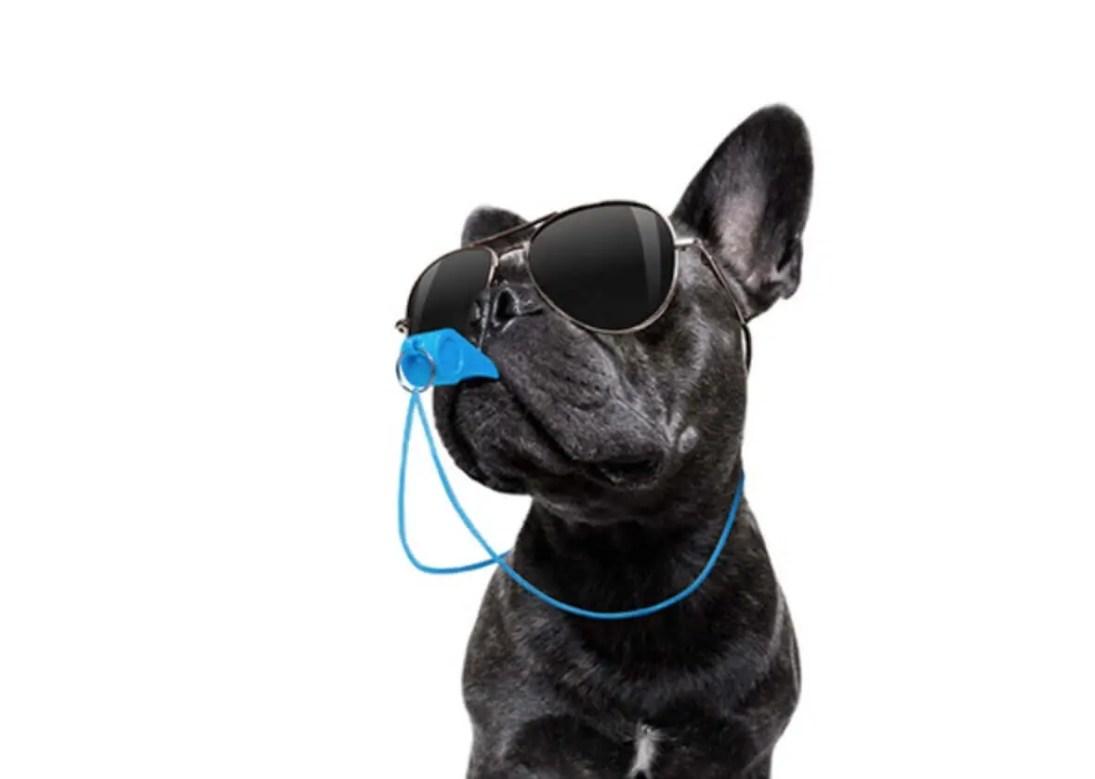 Bulldog francese che fischia con Fischietto ad Ultrasuoni Per Cani