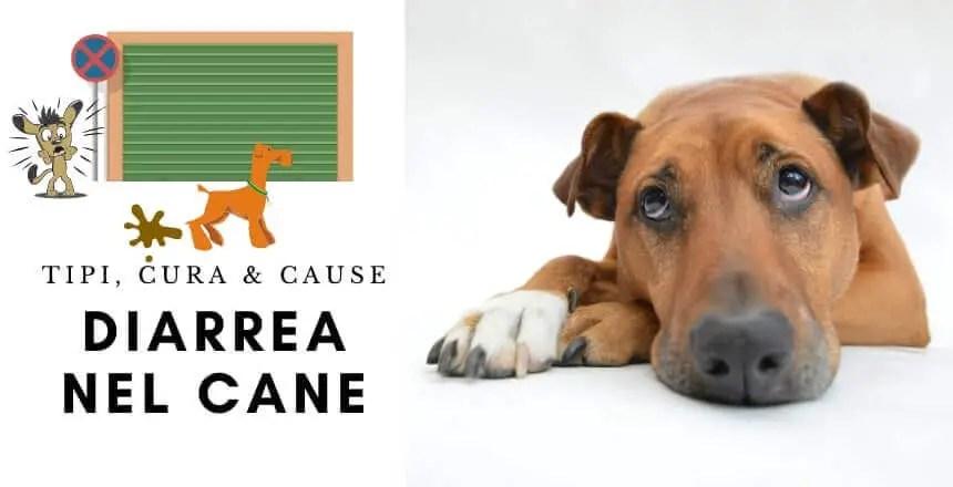 la Guida sulla diarrea nel cane, sintomi, cura, rimedi naturali, cosa fare, cosa non fare, e molto altro ancora