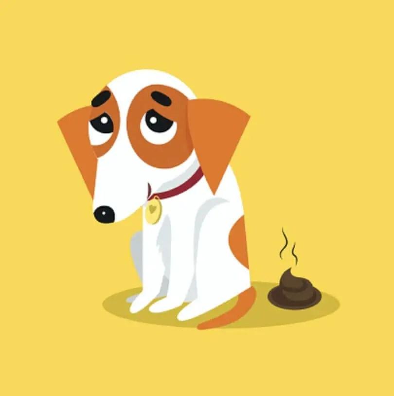 la Guida sulla diarrea nel cane, sintomi, cura, rimedi naturali, cosa fare, cosa non fare, e molto altro ancora3