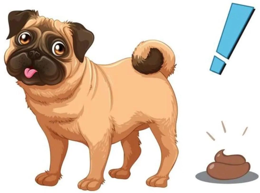 la Guida sulla diarrea nel cane, sintomi, cura, rimedi naturali, cosa fare, cosa non fare, e molto altro ancora9