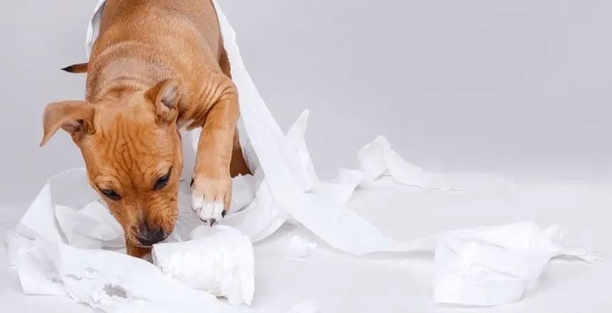 miglior spray repellente per cani naturale e fai da te