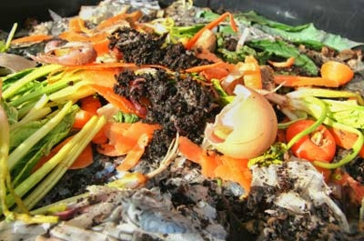 organic waste for vermicomposting