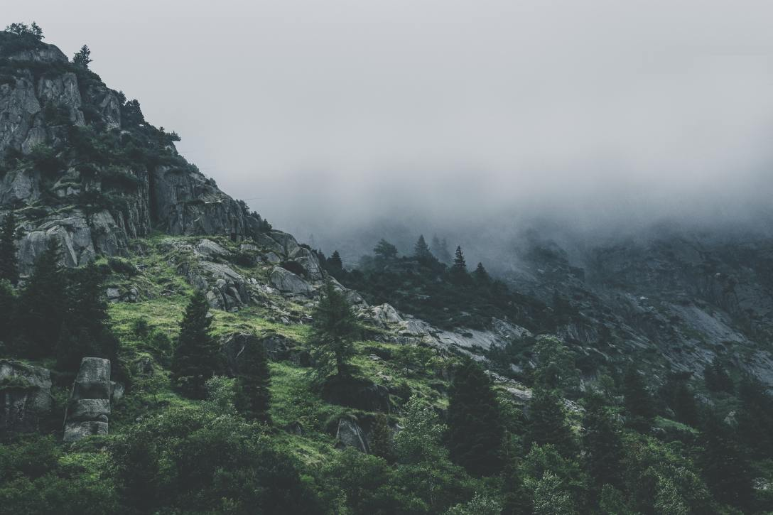 Fog over a rocky, mossy mountain with evergreen trees