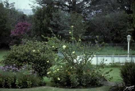 garden, home, South Africa, The Common Vein, Ashley Davidoff MD