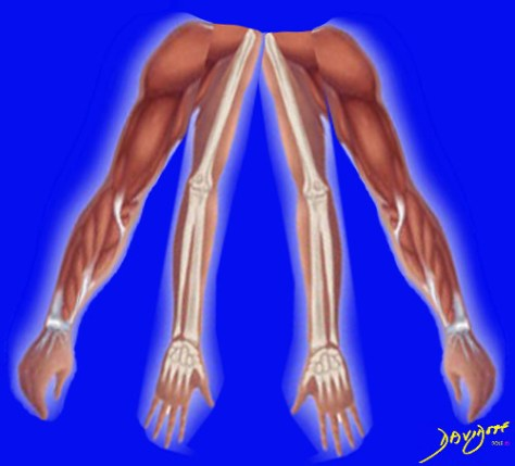 muscles, bones, joints, The Common Vein, Ashley Davidoff MD