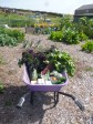 Some of the veg we grew last year