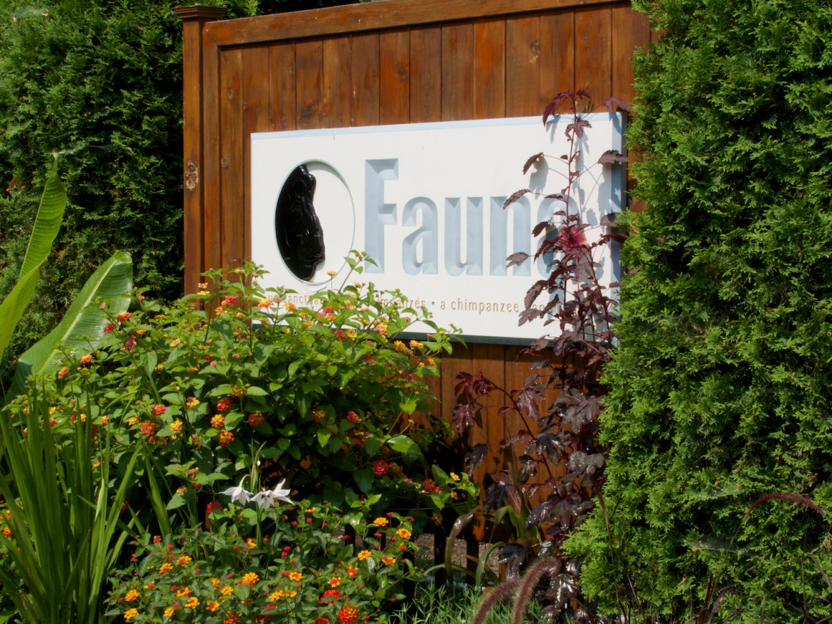 The Fauna Foundation is first and currently the only chimp sanctuary in Canada. Photo by NJ Wight of Fauna.