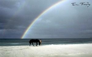 Black Stallion Rainbow