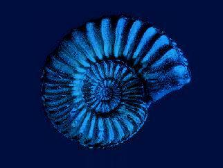 natural_snailshell