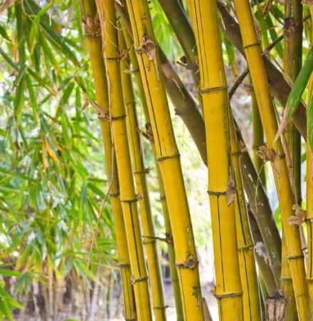 bamboo tress