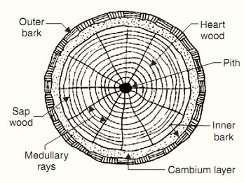 Macrotructure of Tree